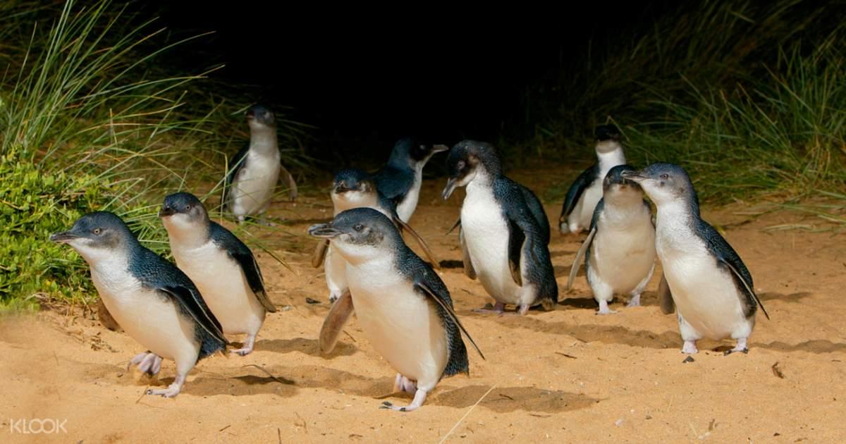 Phillip Island Promotion